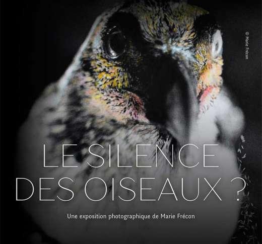 """Exposition """"Le Silence des oiseaux ?"""" Marie Frécon - Toulouse"""
